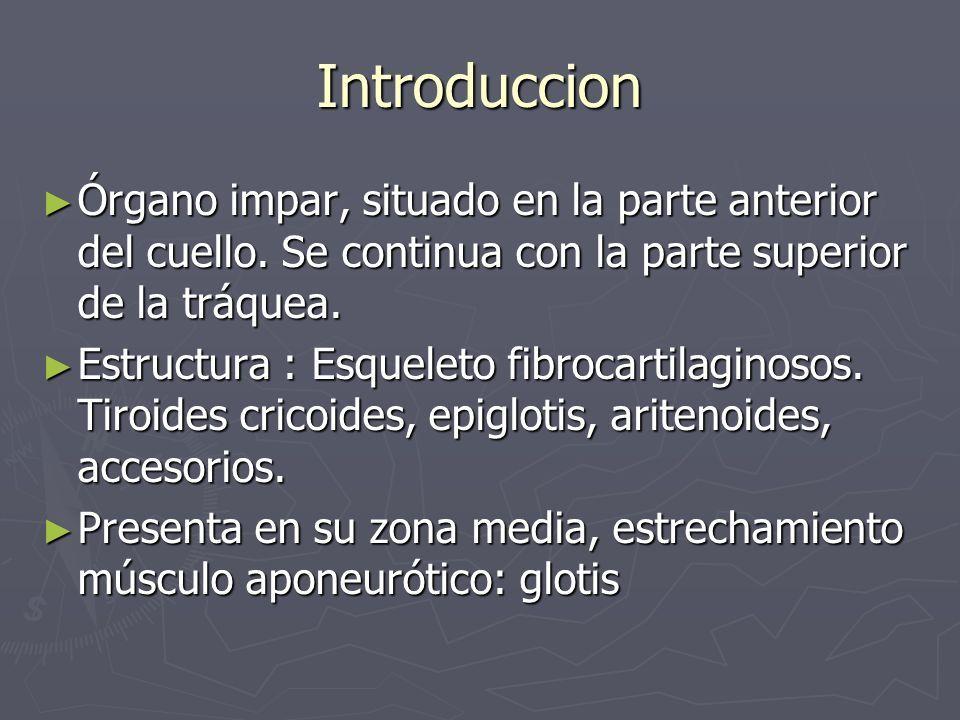 ANATOMIA DE LA LARINGE Luis Quiroz Ramirez Medico – Residente ...