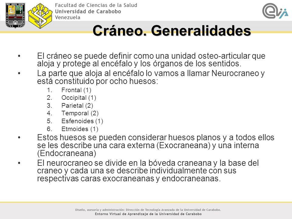 Anatomía del Cráneo Febrero 2007 Dr. Carlos Pinzón. - ppt descargar