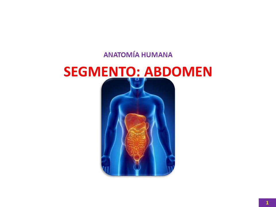 ANATOMÍA HUMANA SEGMENTO: ABDOMEN 1. 2 LÍMITES INTERNOS DE LA ...