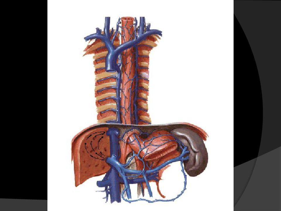 Anatomía y Fisiología del Hígado e Hipertensión Portal - ppt descargar