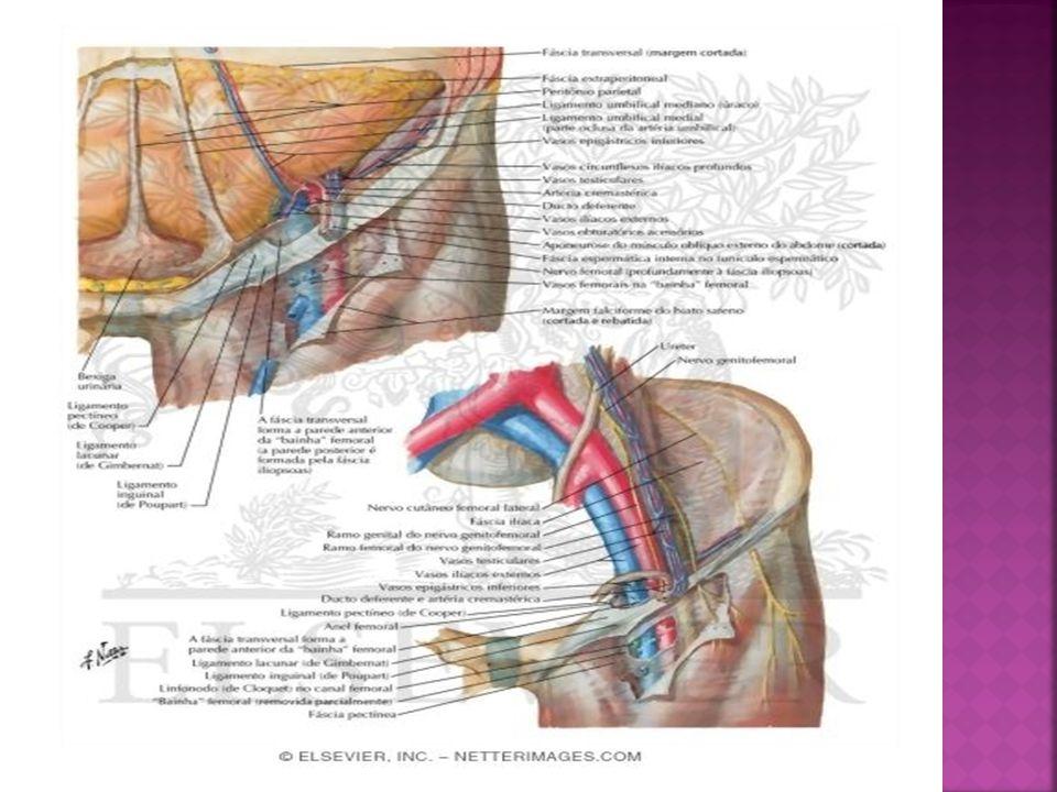 Pared abdominal y canal inguinal - ppt video online descargar