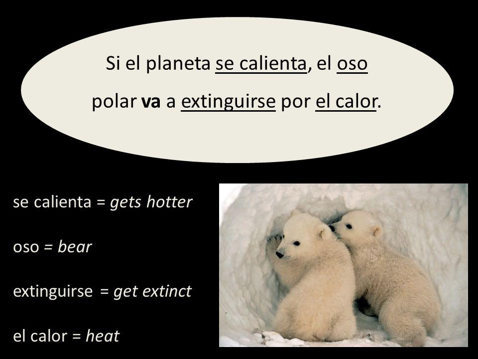 se calienta = gets hotter oso = bear extinguirse = get extinct el calor = heat Si el planeta se calienta, el oso polar va a extinguirse por el calor.