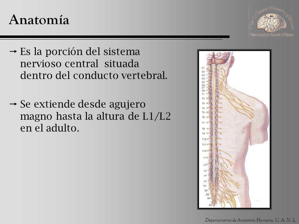 Médula espinal. Departamento de Anatomía Humana, U. A. N. L. ...