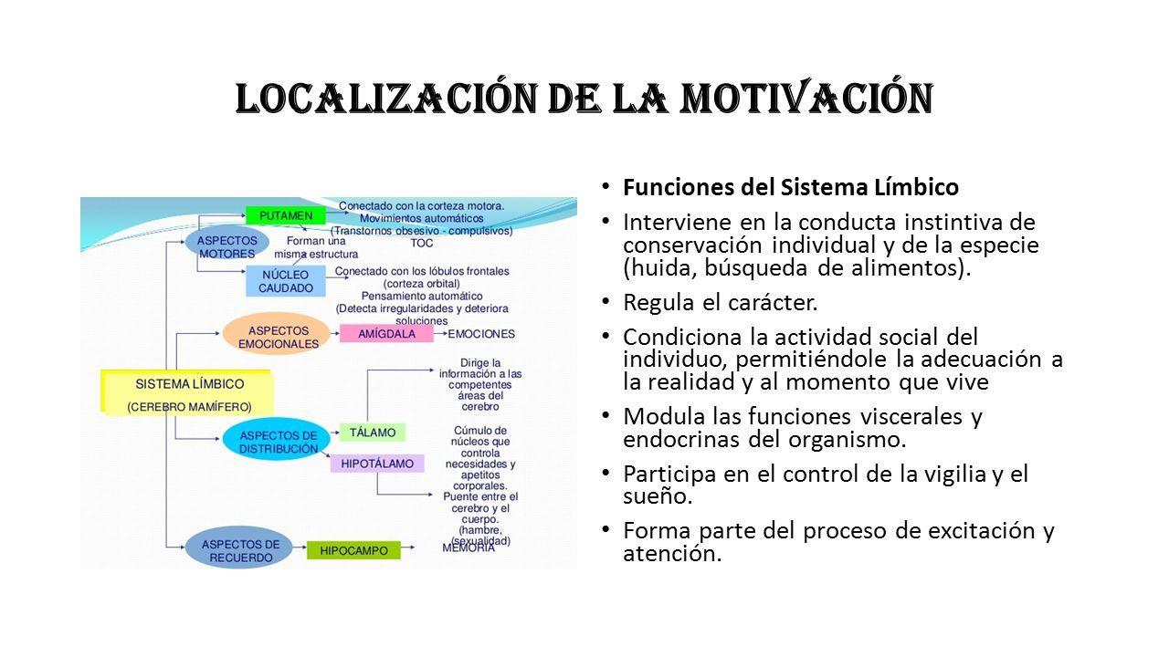 Localización De La Motivación Funciones Del Sistema Límbico