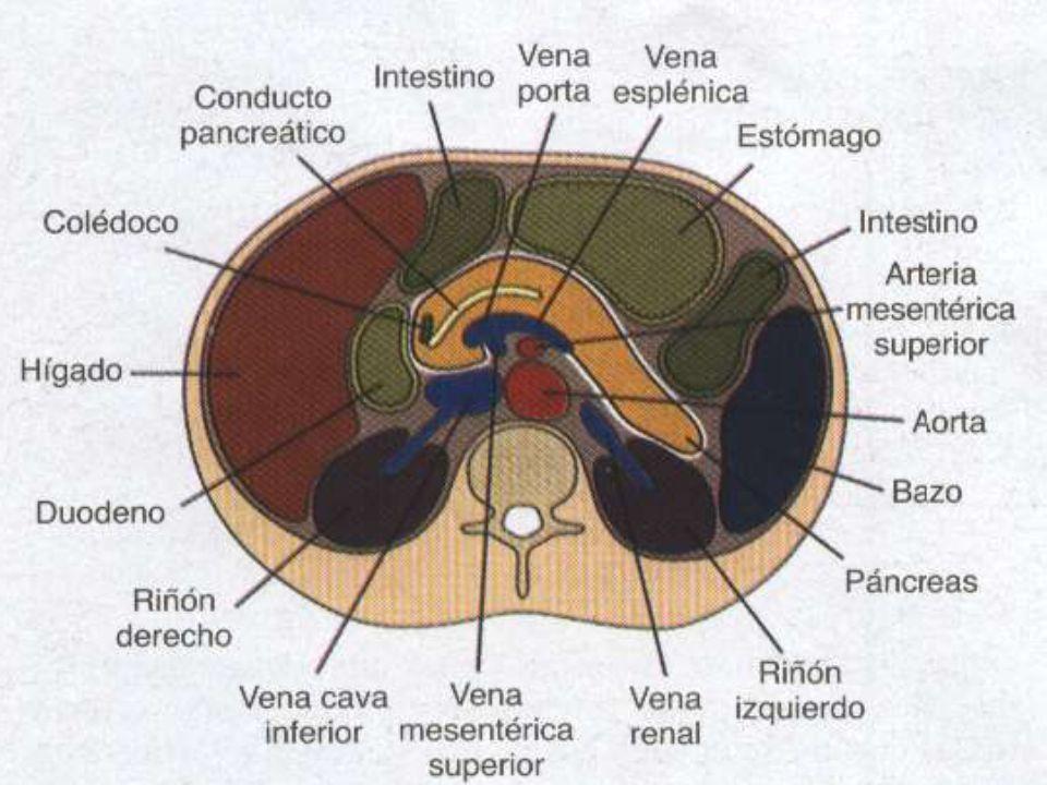 EL PÁNCREAS Anatomía: * Está ubicado en la parte superior y ...