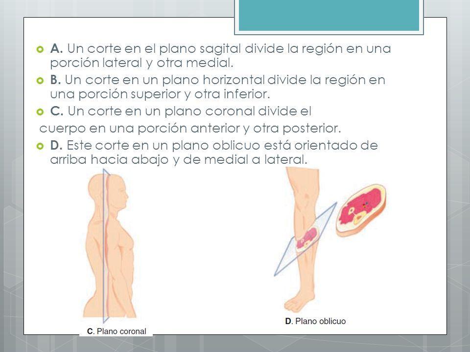 PLANIMETRÍA. Posición anatómica de referencia  Estar de pie ...
