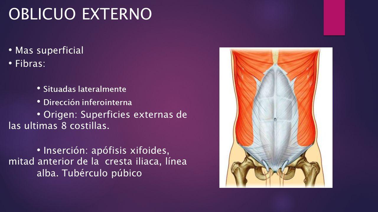 Instituto de Oncología Dr. Heriberto Piter Tema: Anatomía de la ...