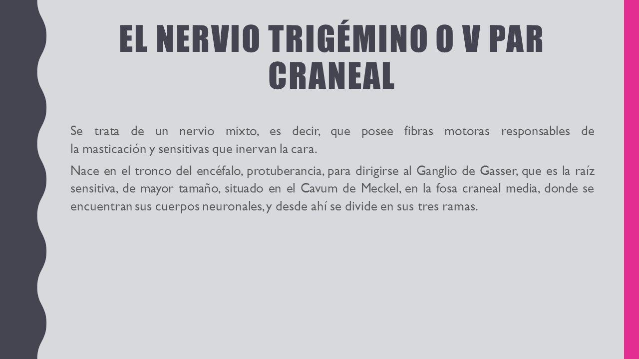 NERVIO TRIGEMINO V PAR CRANEAL. EL NERVIO TRIGÉMINO O V PAR CRANEAL ...