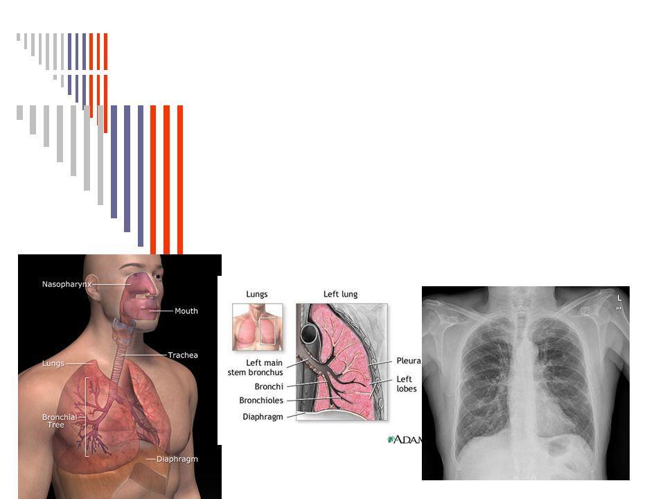 Anatomía y fisiología del Aparato Respiratorio. El aparato ...