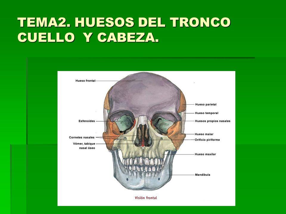 TEMA2. HUESOS DEL TRONCO CUELLO Y CABEZA.. Índice 1. COLUMNA ...