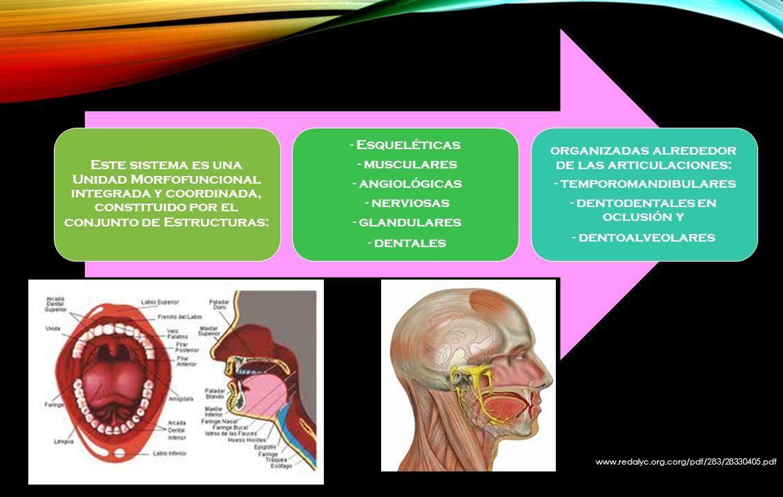 Universidad de Guayaquil «Facultad Piloto de Odontología ...