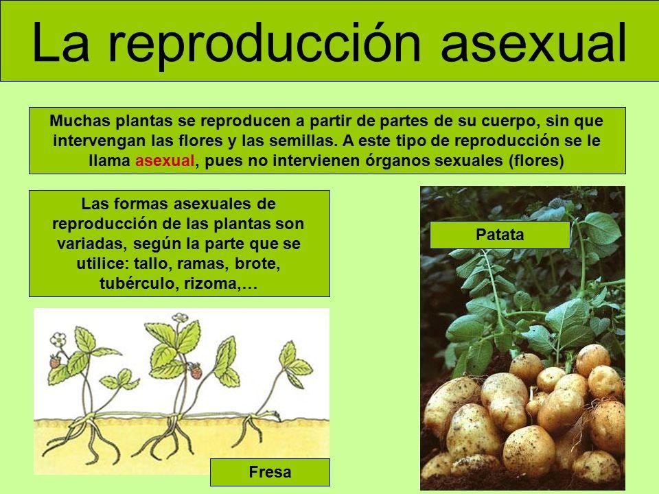 Ejemplos de tipos de plantas que se reproducen sexualmente