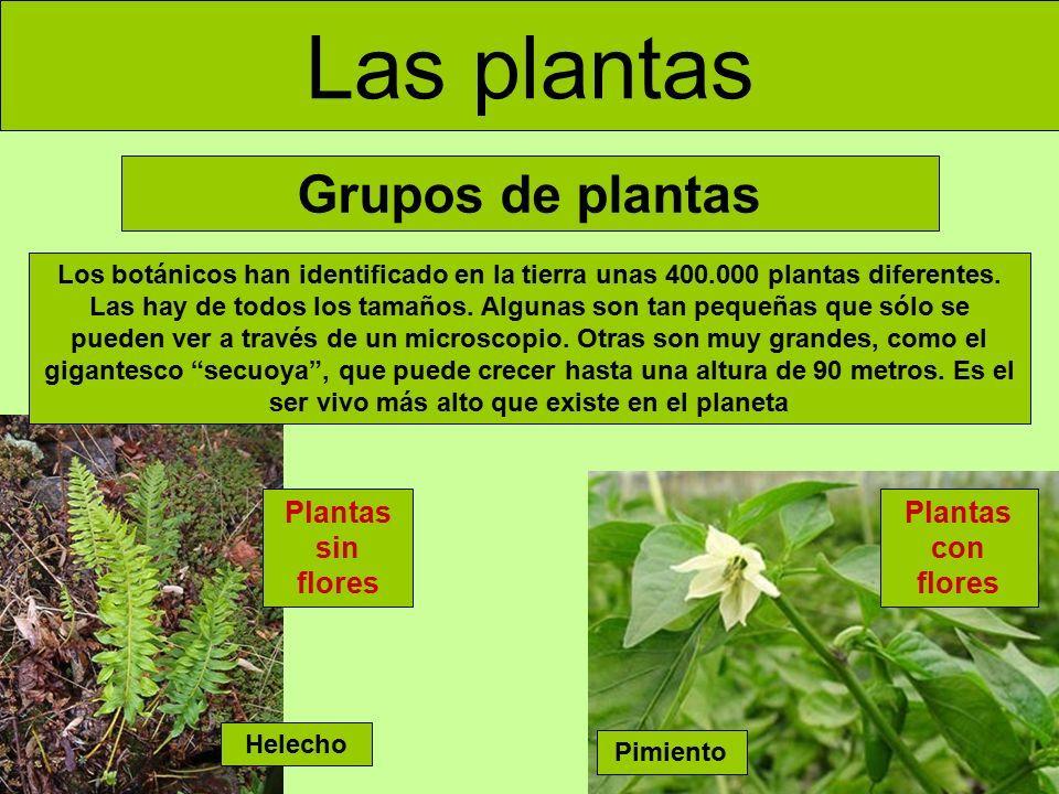 Las Plantas Tema 2 Conocimiento Del Medio 5º Tipos De Plantas La