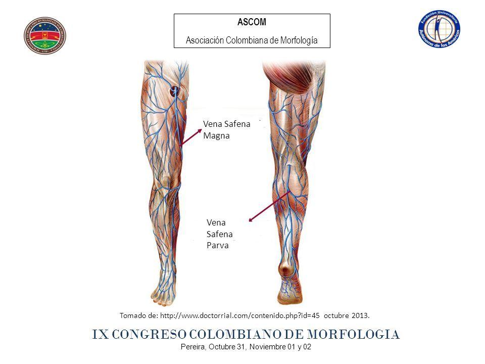 ASCOM Asociación Colombiana de Morfología IX CONGRESO COLOMBIANO DE ...