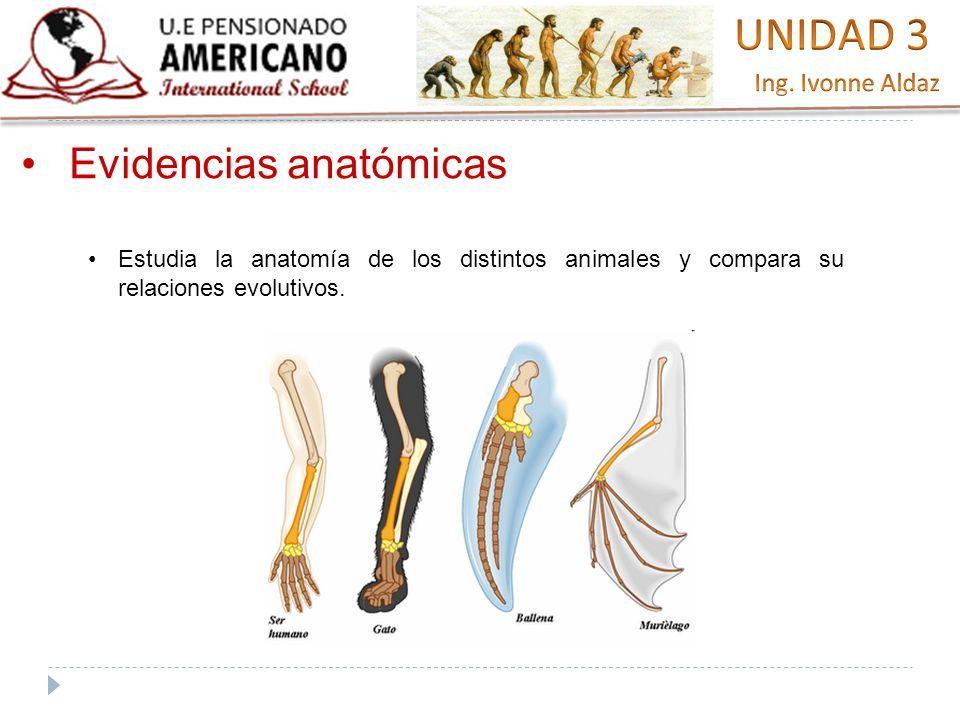 EVIDENCIAS DE LA EVOLUCIÓN BIOLÓGICA» Destreza con criterio de ...