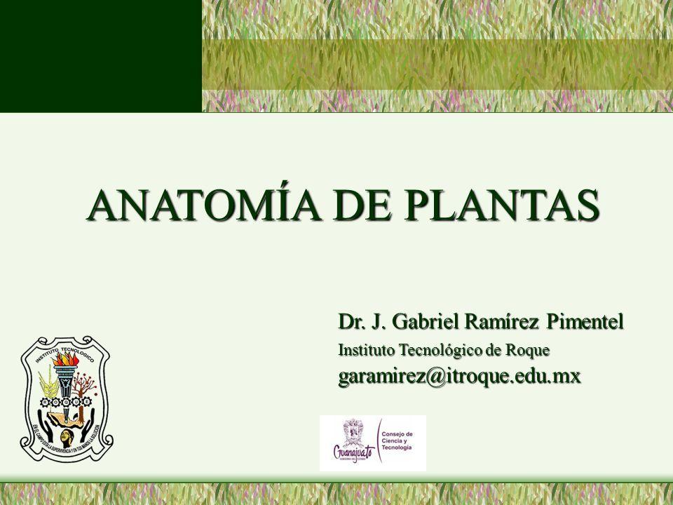 ANATOMÍA DE PLANTAS ANATOMÍA DE PLANTAS Dr. J. Gabriel Ramírez ...