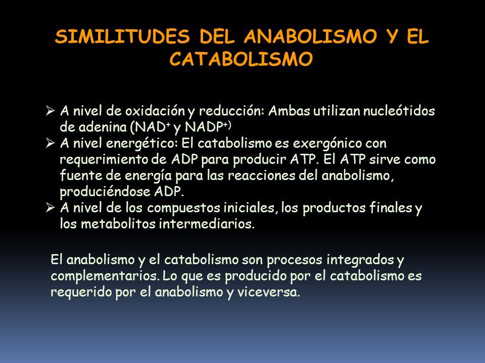 Introduccion Al Metabolismo Mg Roxana Mestas Valdivia Area De Química Biológica Departamento De Biología Universidad Nacional De San Agustín Ppt Descargar