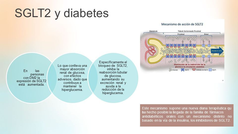 mecanismo de acción de los inhibidores de la diabetes sglt2