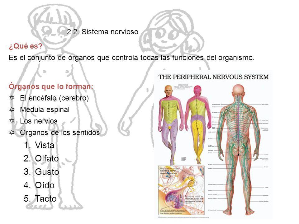 EL CUERPO HUMANO. ÍNDICE 1. Introducción 2. Partes del cuerpo humano ...