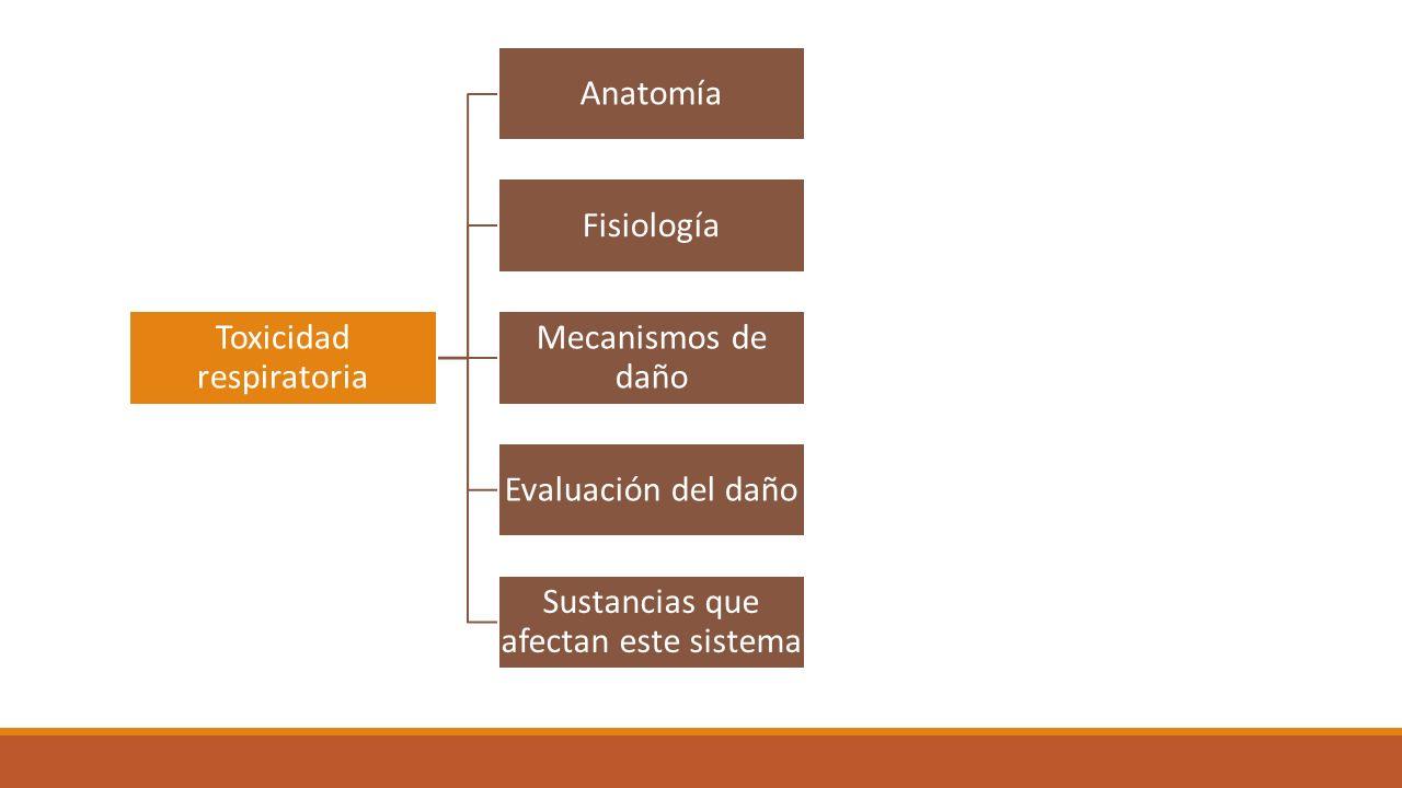 MAESTRIA EN TOXICOLOGIA TOXICODINAMIA DOCENTE: DAVID COMBARIZA ...