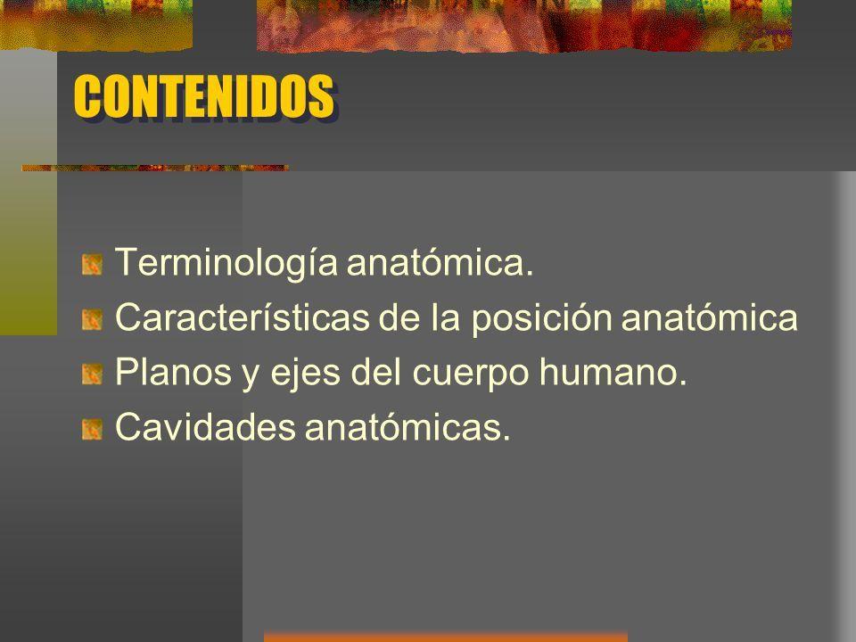 INTRODUCCION A LA ANATOMIA HUMANA CONCEPTOS ANATOMICOS UNIVERSIDAD ...