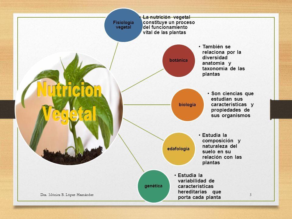 cuales son los procesos implicados en la nutricion vegetal