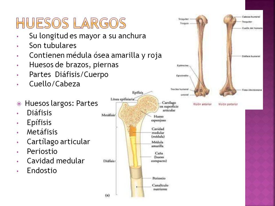 Materia : BIOLOGÍA HUMANA UNIDAD I Biología Humana 1.1 Anatomía y ...