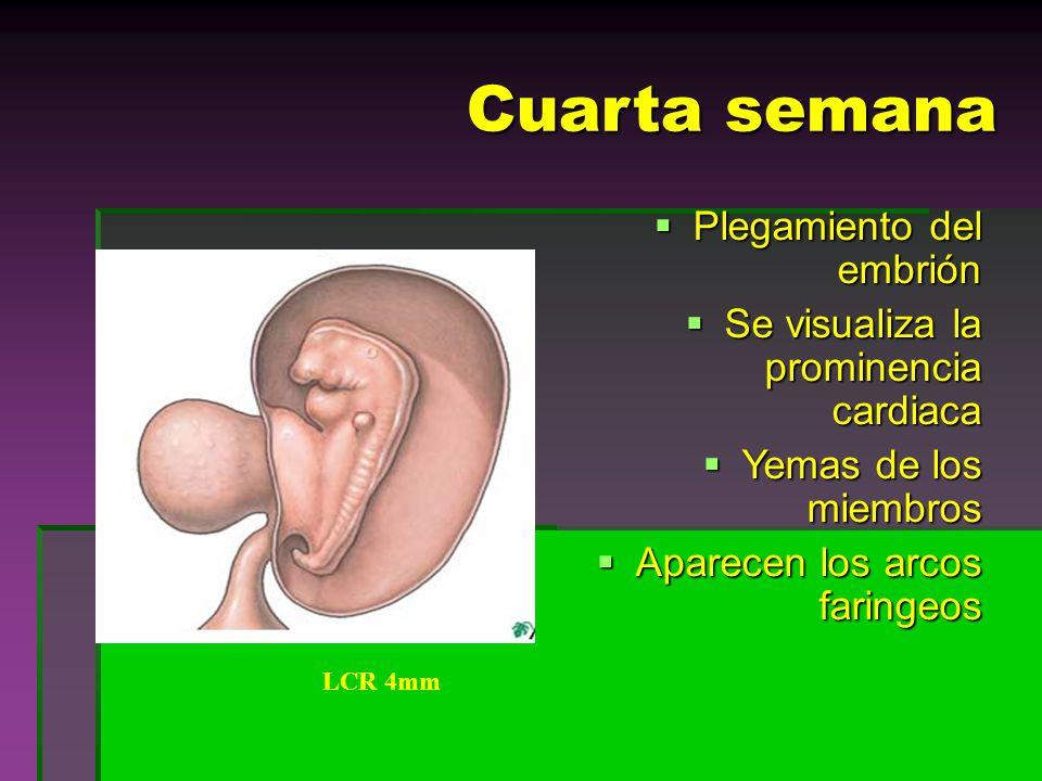 EMBRIOLOGIA HUMANA Tema: Gametogénesis Fecundación Etapas del ...
