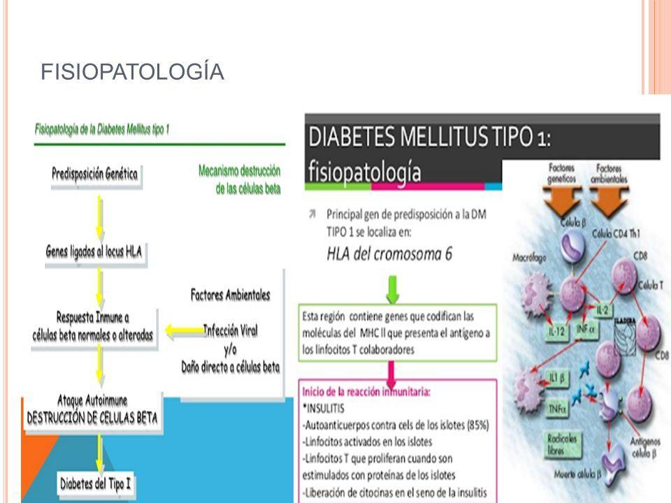 diabetes mellitus tipo 1 fisiopatología archivo ppt