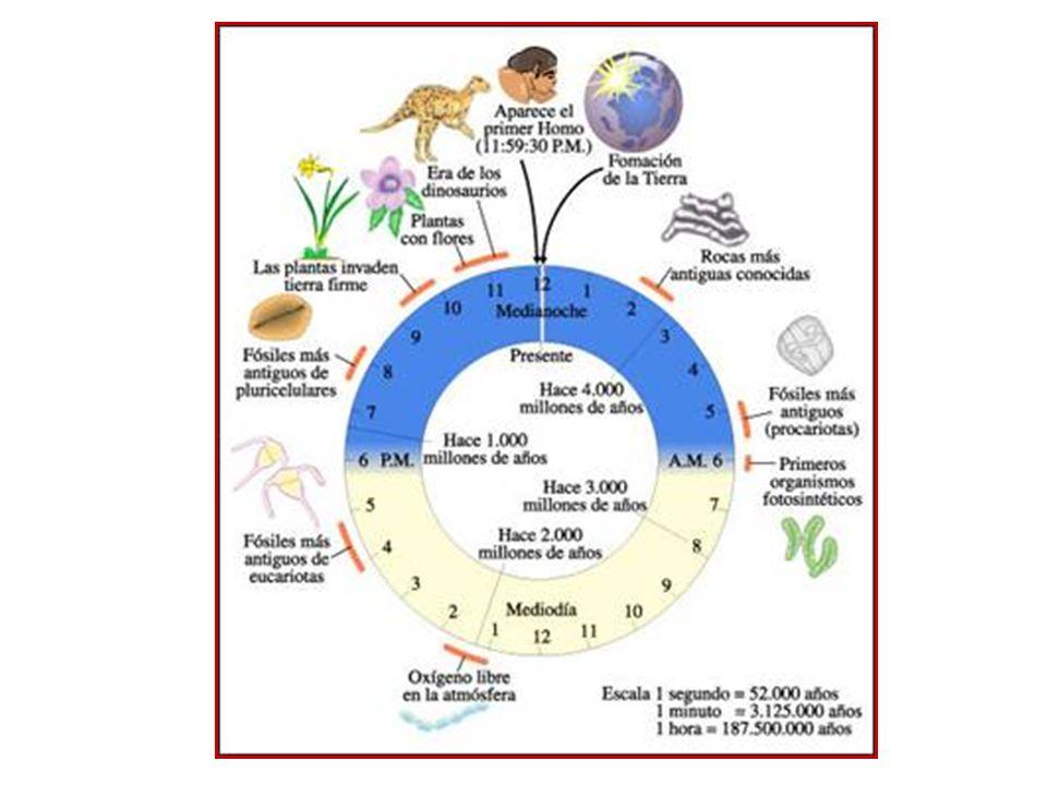 que es evolucion prebiotica wikipedia